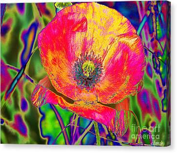 Colorful Poppy Canvas Print by Carol Lynch