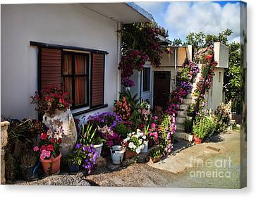 Colorful Potted Flower Garden At A Rural Home In Crete Canvas Print by David Smith