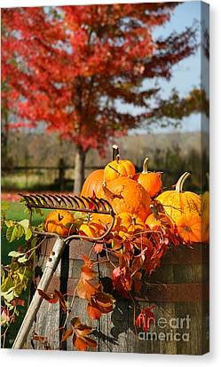 Colorful Pumpkins And Gourds Canvas Print by Sandra Cunningham
