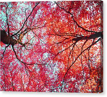 Abstract Red Blue Nature Photography Canvas Print by Artecco Fine Art Photography