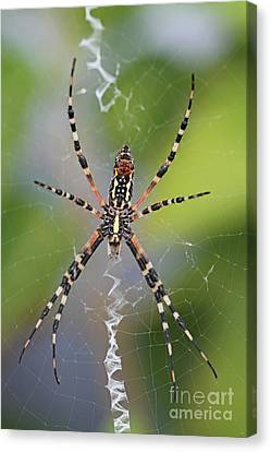 Colorful Spider Canvas Print