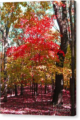 Colorful Woodland Canvas Print