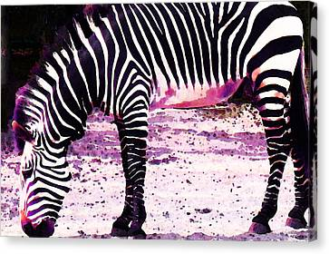 Colorful Zebra 2 - Buy Black And White Stripes Art Canvas Print by Sharon Cummings