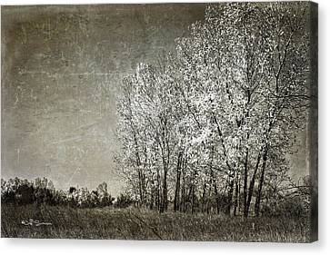 Colorless Fall Canvas Print by Jeff Swanson