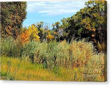Colors Along The Gunnison Canvas Print by Bob Hislop