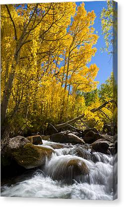 Colors And The Cascades Of South Fork Bishop Creek Canvas Print by Joe Doherty