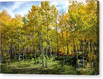 Colors Colorado Canvas Print