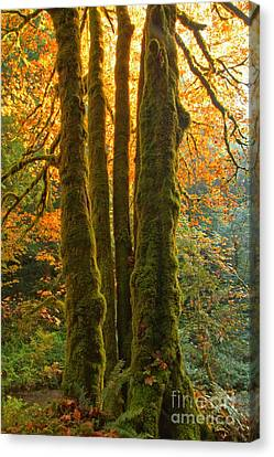 Colors In The Rainforest Canvas Print by Adam Jewell