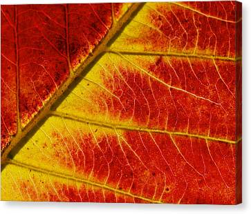 Canvas Print featuring the photograph Colors Of Autumn by Meir Ezrachi