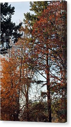 Canvas Print featuring the photograph Colors Of Autumn by Tikvah's Hope