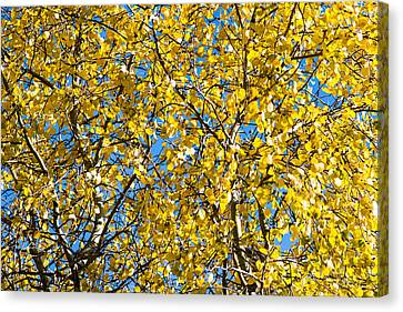 Colors Of Autumn - Yellow - Featured 3 Canvas Print by Alexander Senin