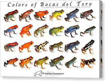 Colors Of Bocas Del Toro Canvas Print by JP Lawrence