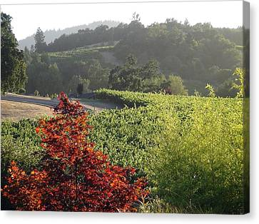 Shawn Marlow Canvas Print - Colors Of Cali by Shawn Marlow