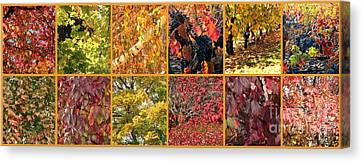 Colors Of Fall Collage Canvas Print by Carol Groenen