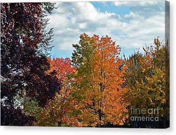 Canvas Print featuring the photograph Colors Of Fall by Judy Wolinsky