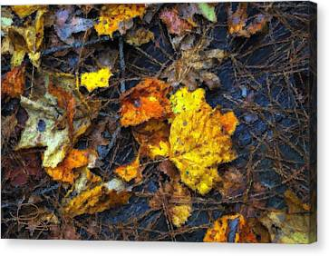 Canvas Print featuring the photograph Colors Of Fall by Ludwig Keck