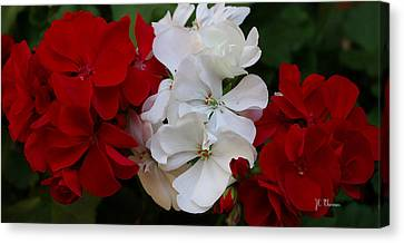 Colors Of Flowers Canvas Print by James C Thomas