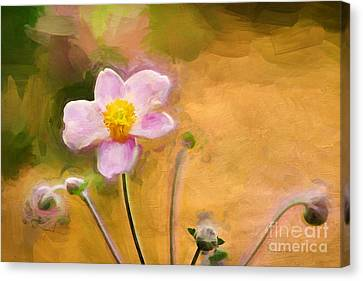 Colors Of October Canvas Print by Darren Fisher