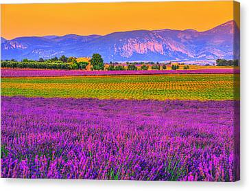 Colors Of Provence Canvas Print by Midori Chan
