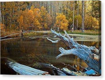 Colors Of The Forest Canvas Print by Jonathan Nguyen