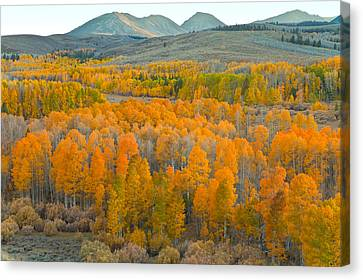 Colors Of The Season Canvas Print