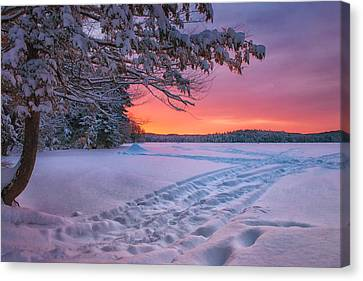 Colors Of Winter Canvas Print by Darylann Leonard Photography