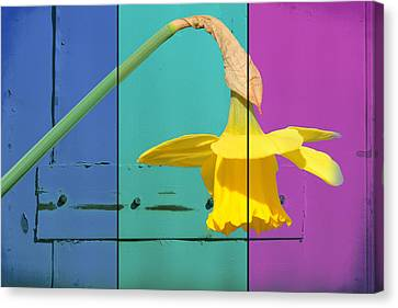 Colour Blocking Spring Canvas Print by Lisa Knechtel