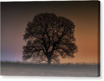 Canvas Print featuring the photograph Colour Tree by Stewart Scott