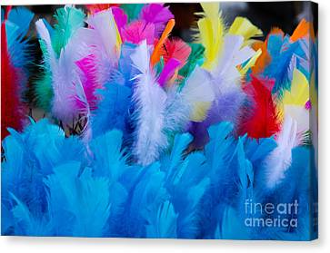 Coloured Easter Feathers Canvas Print