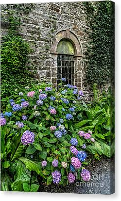 Colourful Hydrangeas Canvas Print