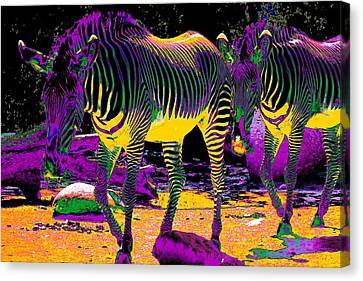 Colourful Zebras  Canvas Print