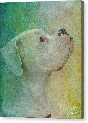 Colours Canvas Print by Judy Wood
