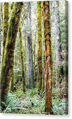 Colours Of A Forest Canvas Print by Claude Dalley