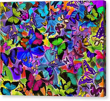 Colours Of Butterflies Canvas Print by Alixandra Mullins