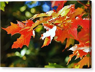 Canvas Print featuring the photograph Colours Of Fall by Al Fritz