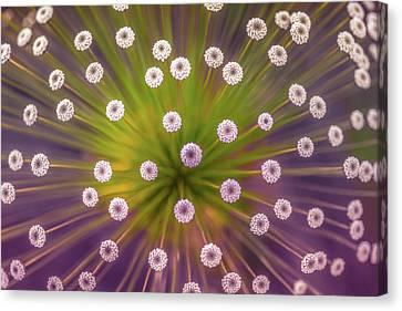 Pov Canvas Print - Colours by Wave Faber