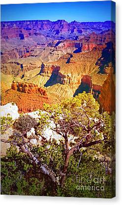 Colours Within The Canyon Canvas Print by Tara Turner