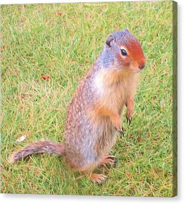 Columbian Ground Squirrel Canvas Print by Cathy Long