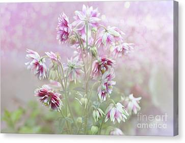 Columbine Beauty Canvas Print by Elaine Manley