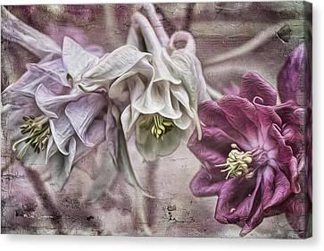Columbine Beauty Canvas Print