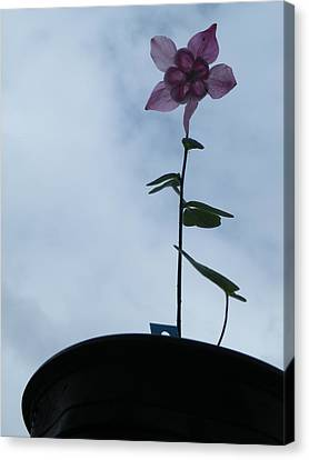 Canvas Print featuring the photograph Columbine Climb by Brian Boyle