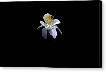 Canvas Print featuring the photograph Columbine by David Andersen