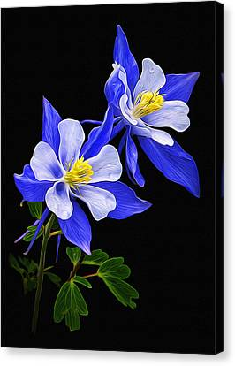 Canvas Print featuring the photograph Columbine Duet by Priscilla Burgers