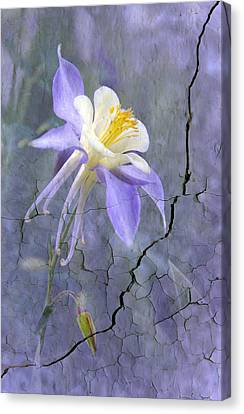 Columbine On Cracked Wall Canvas Print by James Steele