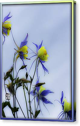 Columbines Canvas Print by Peter v Quenter