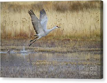 Canvas Print featuring the photograph Come Fly With Me by Ruth Jolly