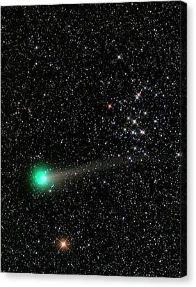 Comet C2013 R1 And Star Cluster M44 Canvas Print by Damian Peach