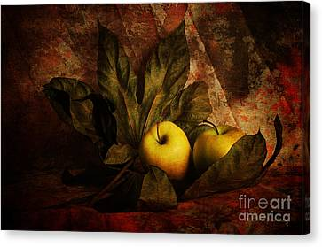 Comfy Apples Canvas Print