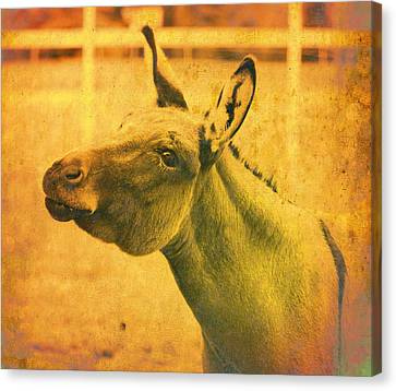 Comical Donkey Canvas Print