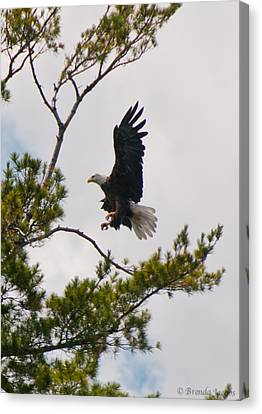 Canvas Print featuring the photograph Coming In For A Landing by Brenda Jacobs